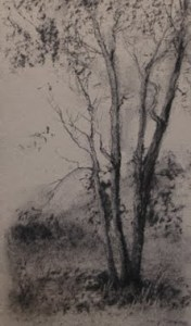 Tree Study Deborah Paris
