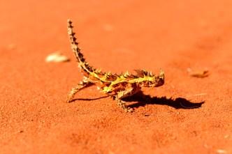 Australian Reptile