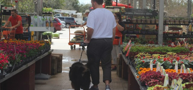 Dog-friendly places around Cooper City