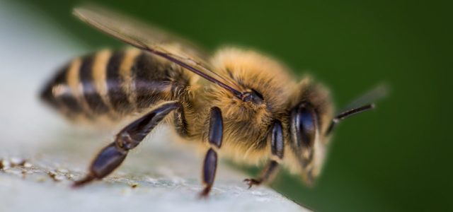 The Cooper buzz: Bees are swarming the campus