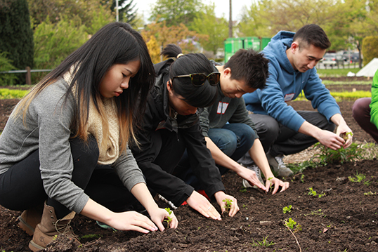 Students learning hands-on how to grow choi.| Photo courtesy of Hua Foundation.