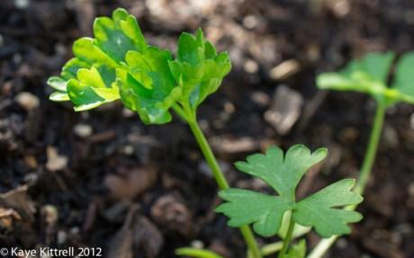 kk_lb-sprouts-7