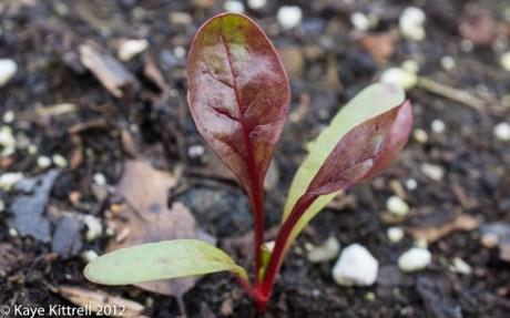 kk_lb-fall-sprouts2-17