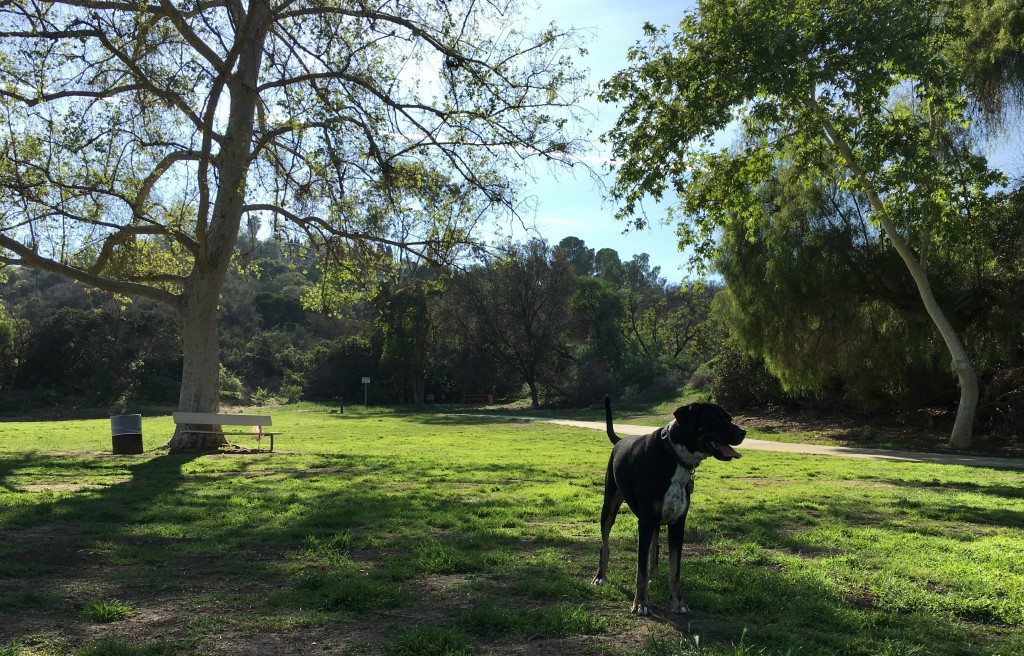 Lexi at Serrania Park