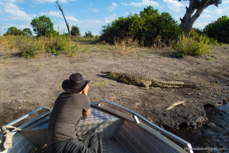 Nile Crocodile at Chobe