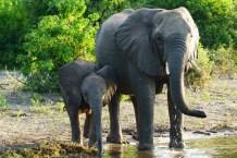 Botswana Blog-78