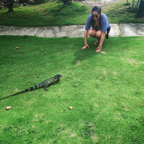 iguane la creole