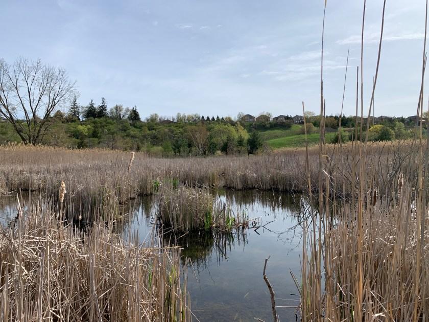 Elder's Mills Nature Reserve