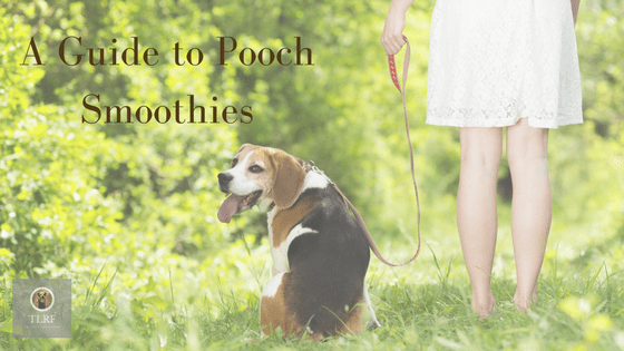 Dog Smoothie Guide
