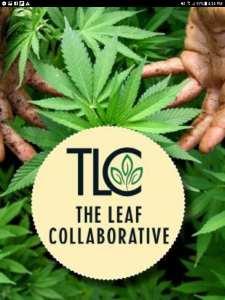 Amazing 8 Week Semester Fall 2019 Thursday Option @ The Leaf Collaborative