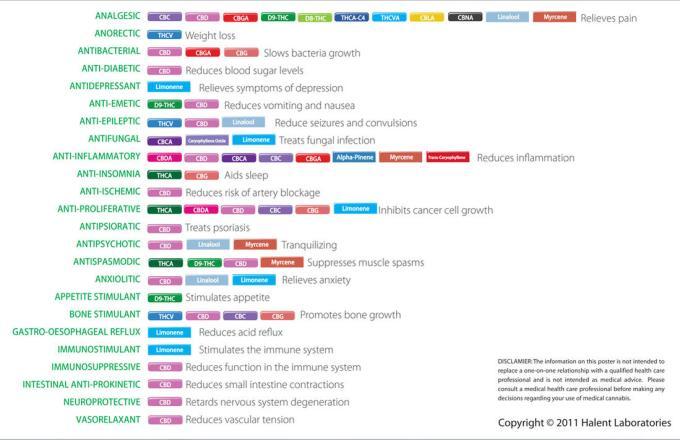Cannabinoid Profile: A Crash Course in THCa, Source: Source: http://wellsuitedforlife.files.wordpress.com/2013/11/halent-2011-cannabinoid-and-terpenoid-chart.jpg