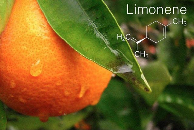 limonén terpén - kender komplex nyers cbd olaj