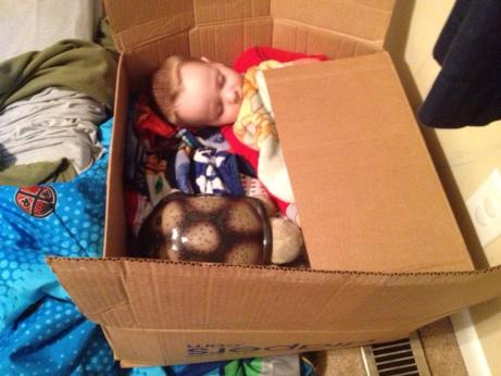 sleeping inside a box