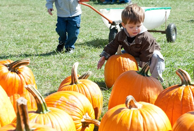 Two-year-old Patrick Fitzgerald, a member of St. Elizabeth Parish in Kansas City, Mo., picks out a pumpkin during CEF Day at the Pumpkin Patch on Oct. 5. The event at the KC Pumpkin Patch and Corn Maze in Gardner raised scholarship funds to help students attend Catholic schools.