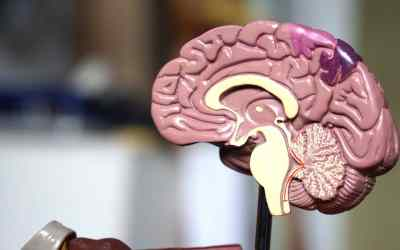 Stroke Recovery: Can the brain heal itself