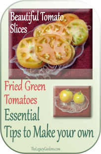 Fresh slices of green tomato, before frying.