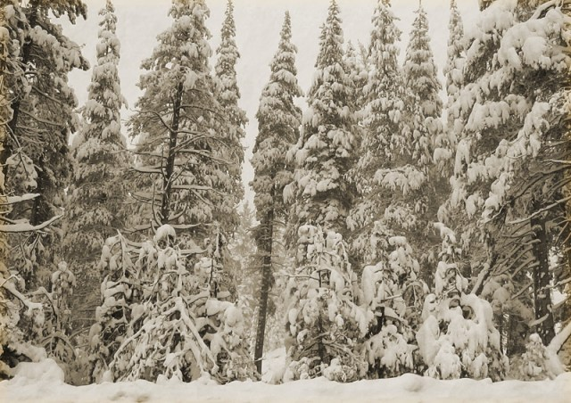 Snow-Forest2