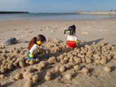 Crab spotting at Currumbin beach