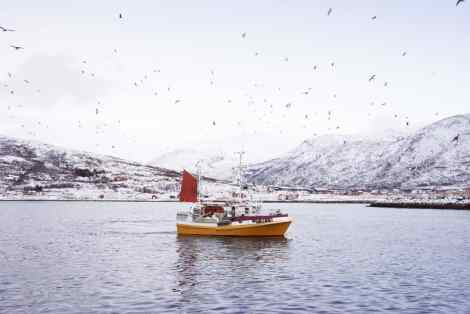Norwegian trawler seeking Skrei