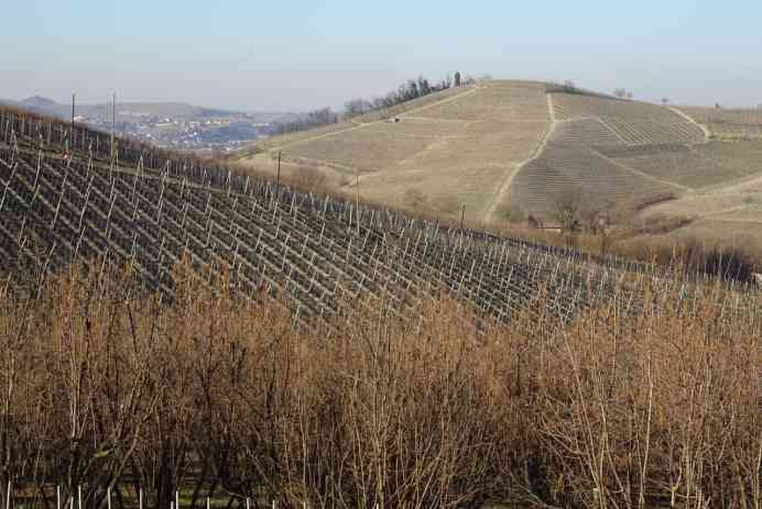 The rolling hills of Barbaresco