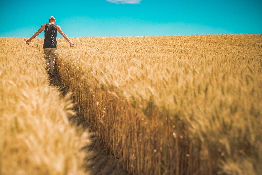 Farm Bills Explained: Facts Vs Myths
