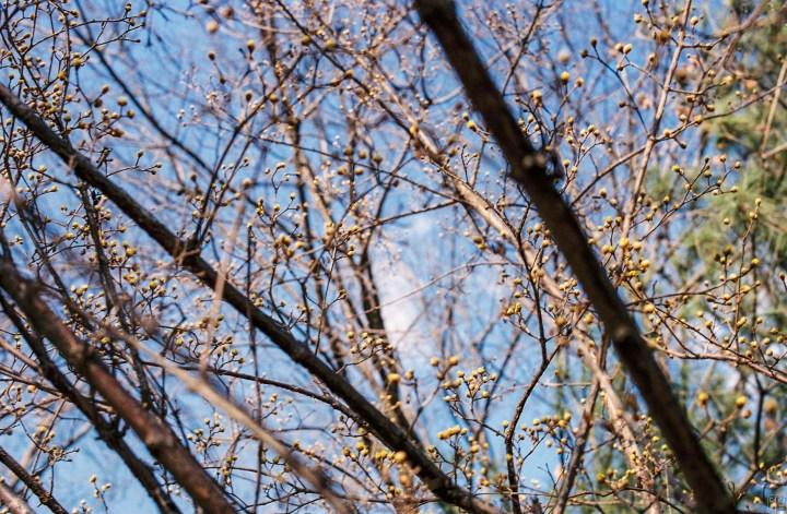 Leica M7, Summilux-M 1:1.4/50 asph | Kodak Portra 400 film