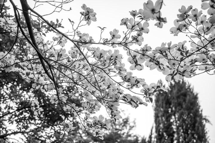 Leica M10, Summilux-M 1:1.4/35 asph fle , Monochrome