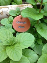 Orange Mint