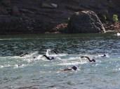 Horsetooth reservoir swim