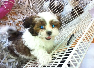 adorable puppy in pet store