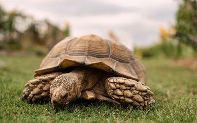 Eddie & The Giant Tortoise