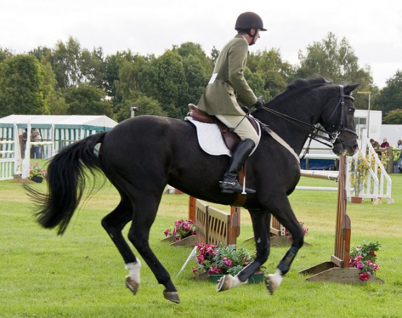 Show jumping by Barry Skeates via Flickr