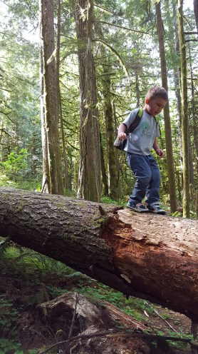 Old Salmon River Trail 2016-7-1 (25 of 158)