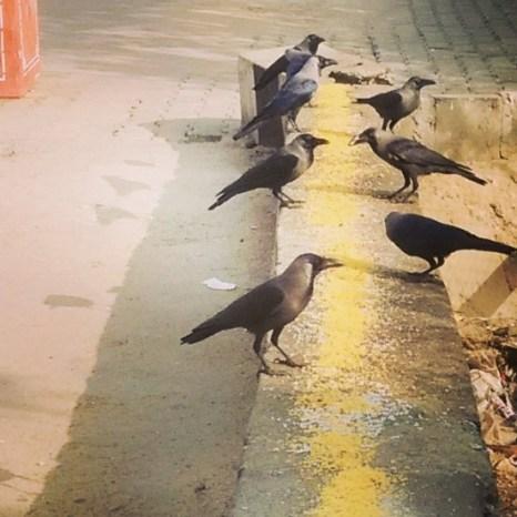 birds-near-jal-mahal-jaipur-travelogue