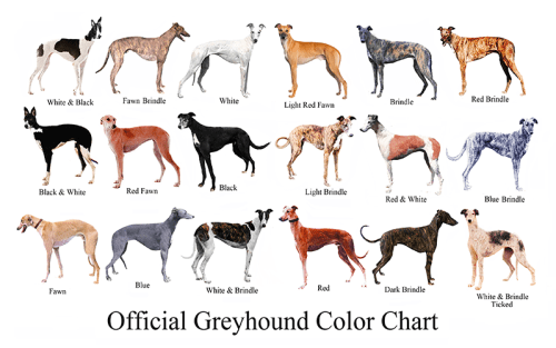 official-greyhound-color-chart