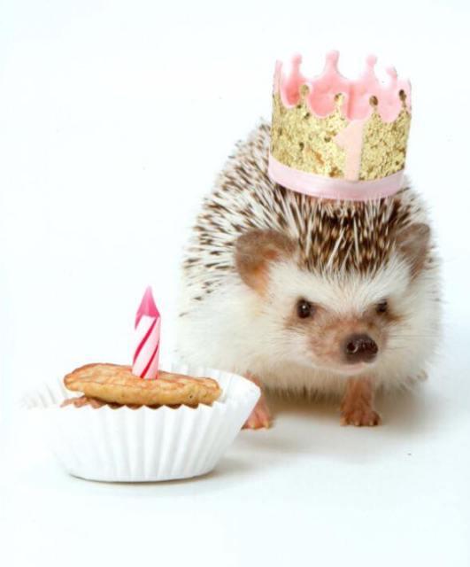 Koko Birthday