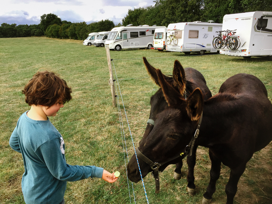 Boy feeding donkey at campsite