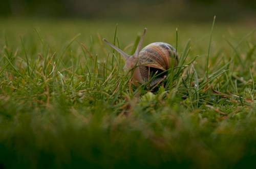 image of a snail moving through blades of grass