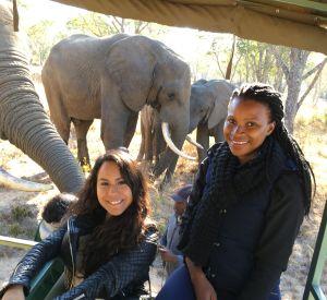 Africa - Zimbabwe - Imire Game Park - Elephants truck