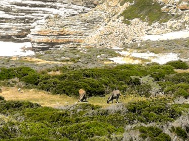 National Park Cape Xtreme Tour-Cape Town-South Africa