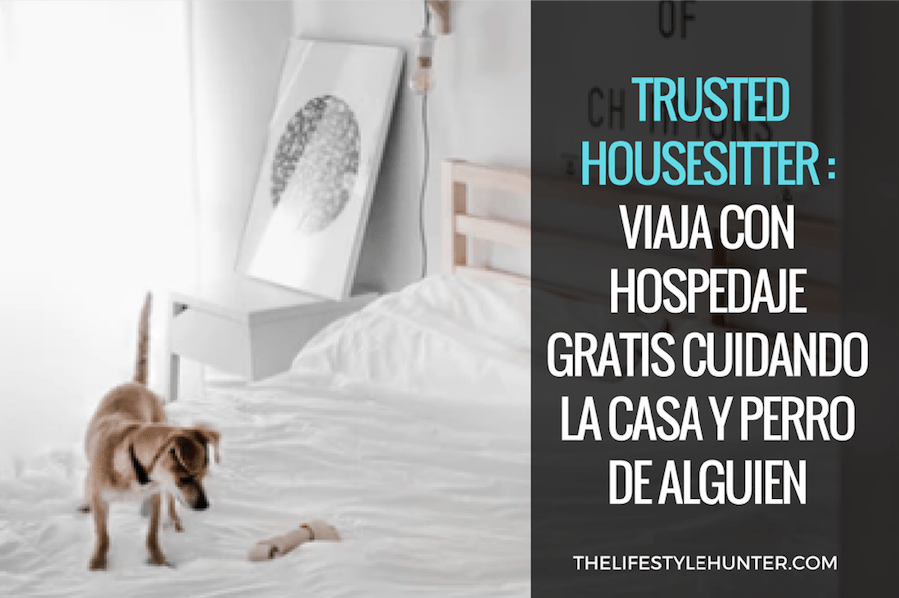 Voluntariado - trusted housesitter casas