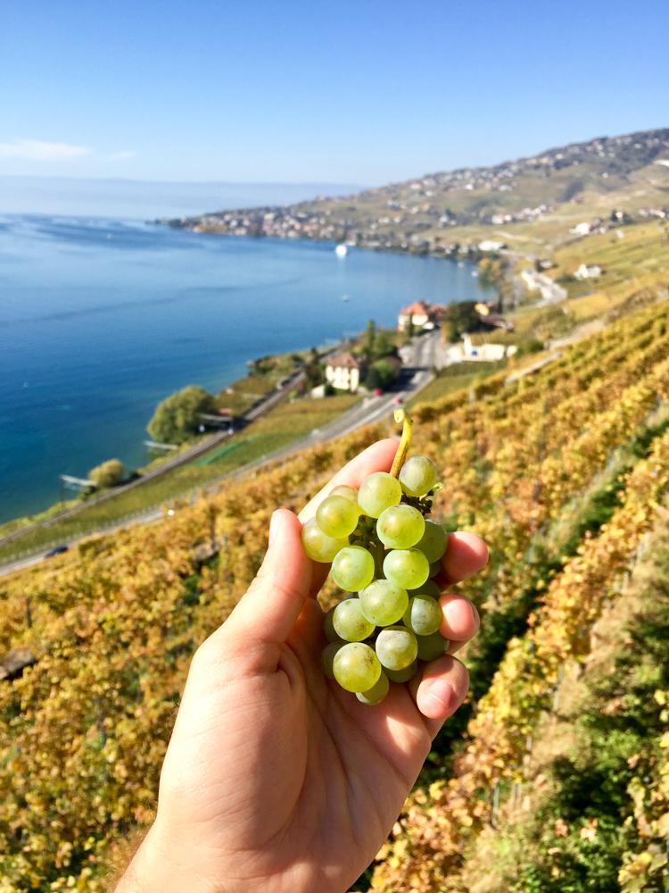 Work in Switzerland - Geneva - Gland - United Nations - Ramsar