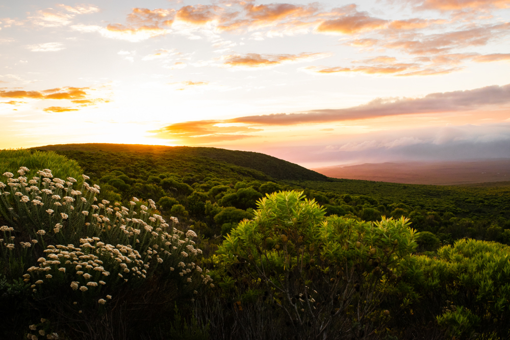 Grootbos Private Nature Reserve - Cape Town - South Africa