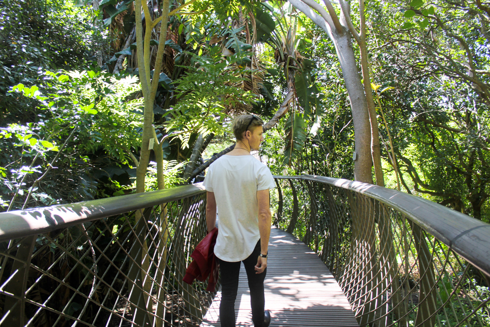 Kirstenbosch Botanical Garden canopy walk - Cape Town - South Africa
