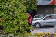 Isfahan-7229