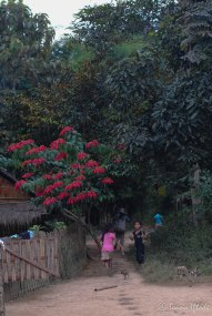 Laos-4193