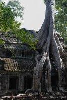 Cambodia-5766