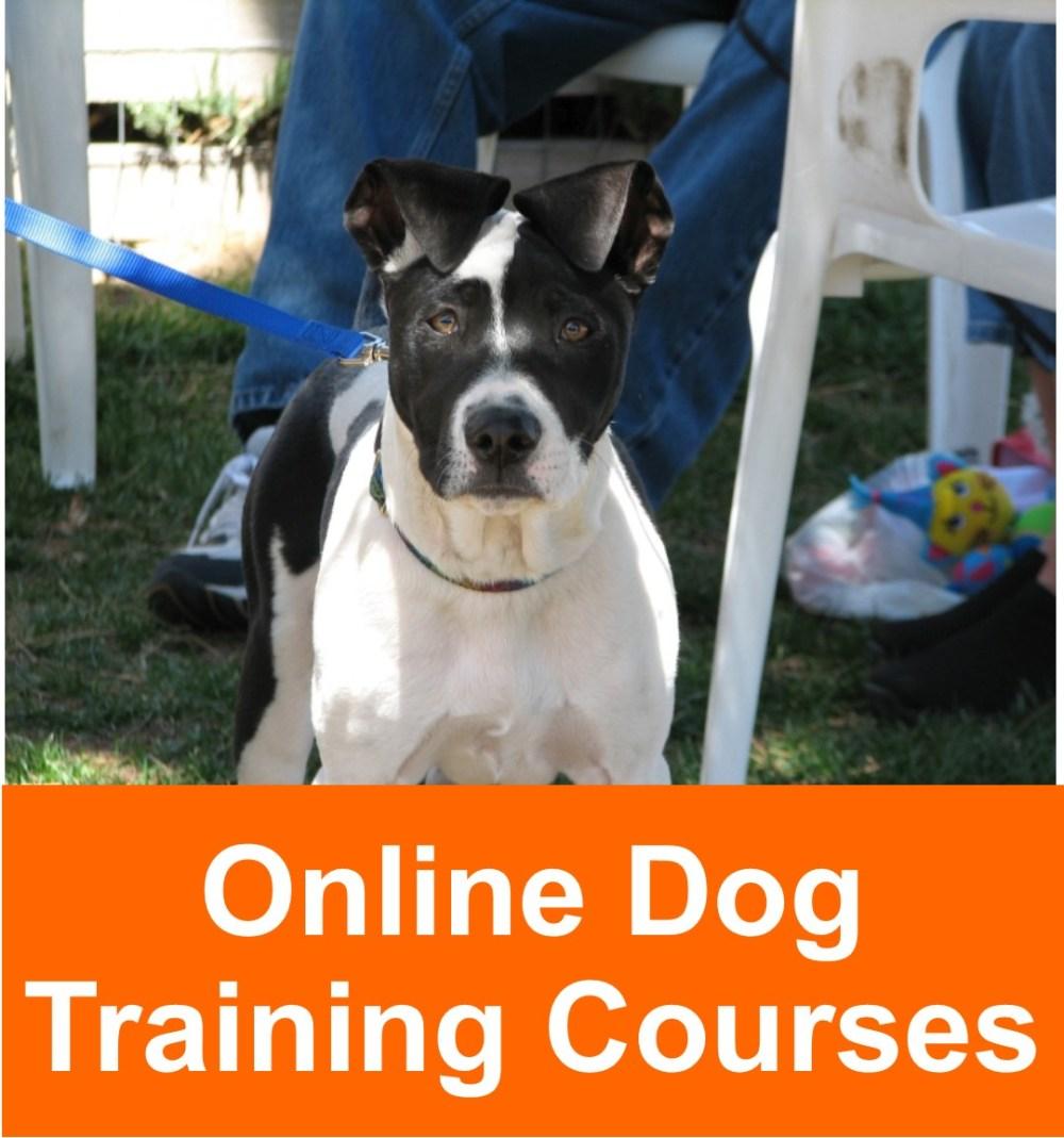 online_dog_training