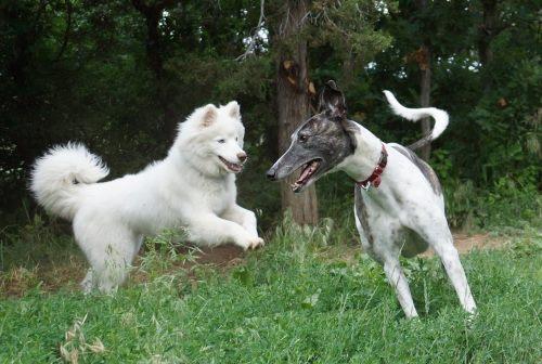 dog training timing