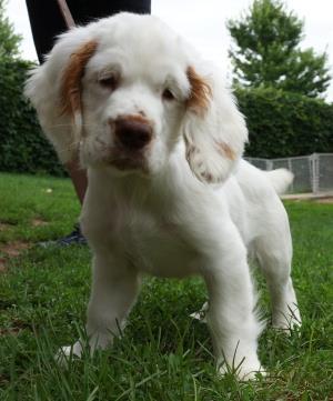 puppies grooming handling